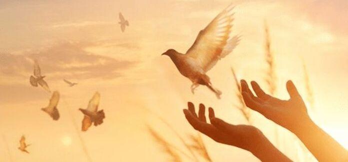 esperança e liberdade