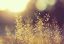 a presença de Deus nas pequenas coisas na natureza